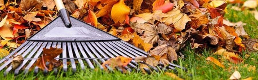 Fall Cleanup Huntsville AL
