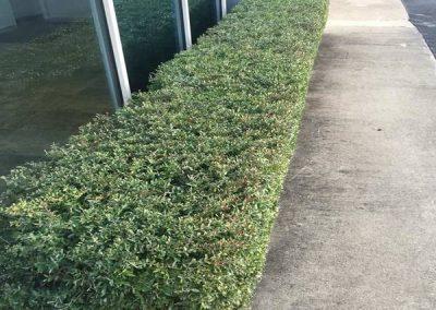 Huntsville AL Pruning Service